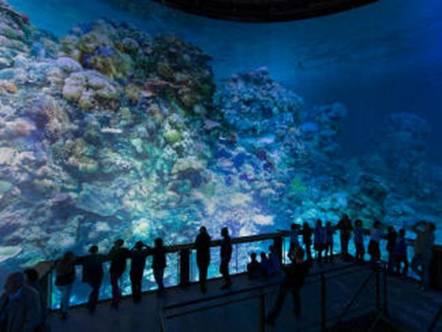 "Abb. 360°-Panorama ""Great Barrier Reef"""